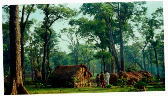 क्यों वन अधिकार क़ानून 2006 बीजेपी को खटक रहा है?