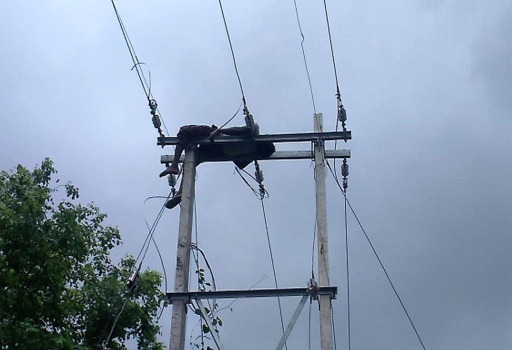 विद्युत श्रमिक