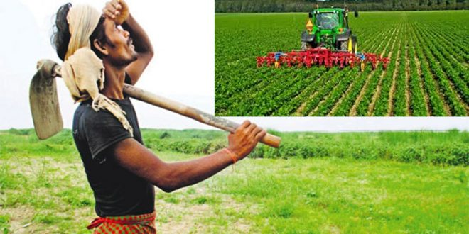कृषि उत्पादन