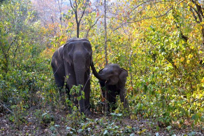 अलग झारखण्ड में वन अधिकार अधिनियम की ज़मीनी हकीकत