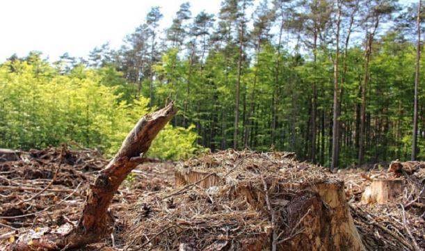 जंगल की ज़मीन