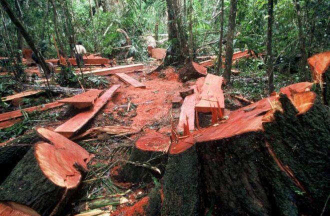 वनभूमि को नज़रअंदाज़ कर केंद्र का खनिजों का दोहन संभव बनाने की तैयारी